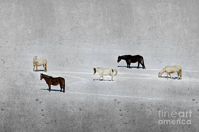 Photograph - Horses In The Snow by Dan Friend