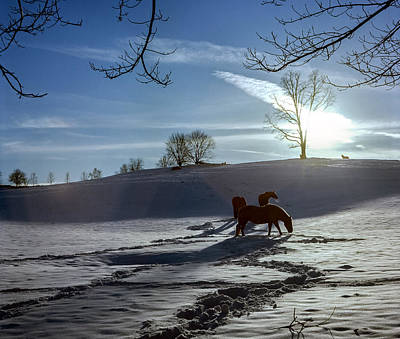 Photograph - Horses In The Snow by Greg Reed