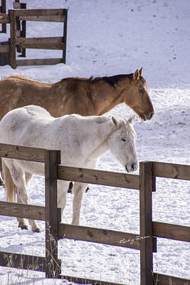 Photograph - Horses In The Snow by Ricky Dean