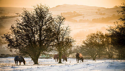 Photograph - Horses In The Snow, Whalley Bridge, High Peak, Uk by Neil Alexander