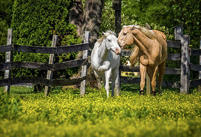 Photograph - Horses In Yellow Field by Ron Pate