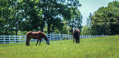 Pineland Farms Photograph - Horses by Jane Luxton