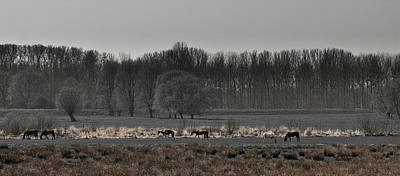 Photograph - Horses by Jos Verhoeven