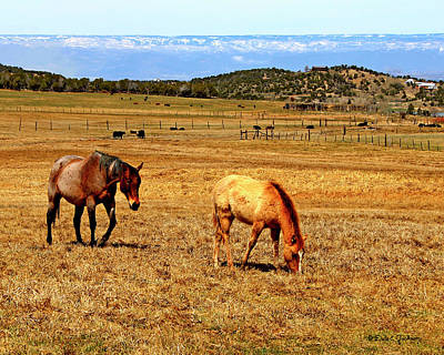 Photograph - Horses Living Country Style Sunset by Dale E Jackson