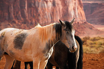 Photograph - Horses Monument Valley by Harry Spitz