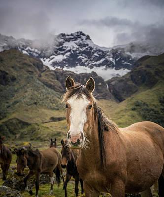Ecuador Photograph - Horses Of Ecuador by Daniel Cooley