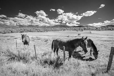 Horses Of San Juan Print by Jon Glaser