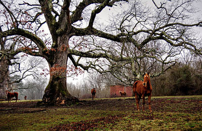 Winter Photograph - Horses On A Foggy Morning by Greg Mimbs