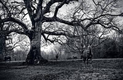 Horse Photograph - Horses On A Foggy Morning In Black And White by Greg and Chrystal Mimbs