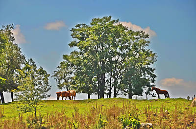Horses On A Hill Art Print by Bill Cannon