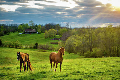 Photograph - Horses On A Pasture In Kentucky by Alexey Stiop