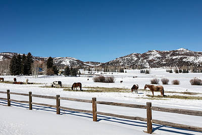 Photograph - Horses On A Small Farm Near The Aspen Airport by Carol M Highsmith