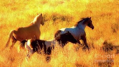 Horses On Golden Hill Original by Gus McCrea