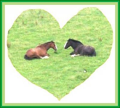 Photograph - Horses On Grass Heart by Julia Woodman