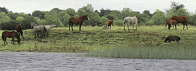 Photograph - Horses On Ireland's River Shannon by Walter E Koopmann