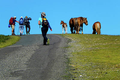 Photograph - Horses On The Camino by Mike Shaw