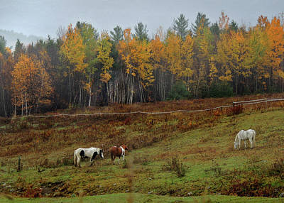 Photograph - Horses On The Hill In Autumn by Nancy Griswold