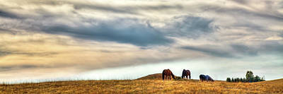 Photograph - Horses On The Palouse by David Patterson