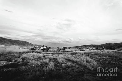 Photograph - Horses On The Range by Marilyn Nieves