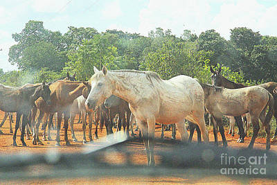 Photograph - Horses On The Transpantaneira Highway by Nareeta Martin