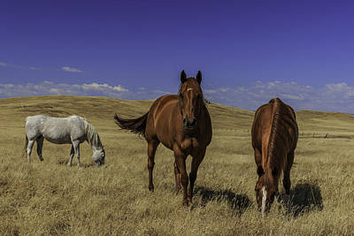 Photograph - Horses by PhotoWorks By Don Hoekwater