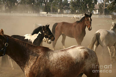 Photograph - Horses Playing by Waterdancer