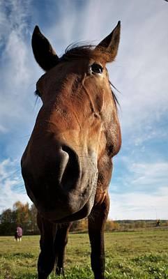 Photograph - Horses Portrait by Tamara Sushko
