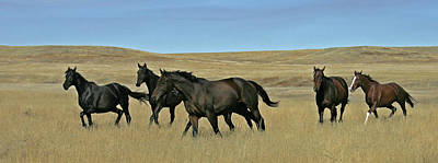 Photograph - Horses by Ralph Fahringer