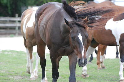 Photograph - Horses by Rob Hans