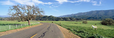 Horses, Santa Ynez Mountains In Spring Art Print by Panoramic Images