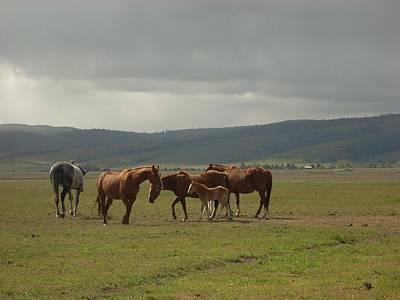 Photograph - Horses by Sara Stevenson