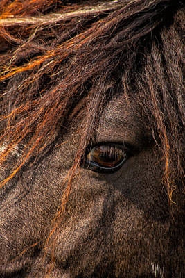 Photograph - Horses Soul Is Thru The Eye by Karol Livote