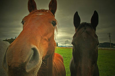 Photograph - Horses by Theresa Pausch
