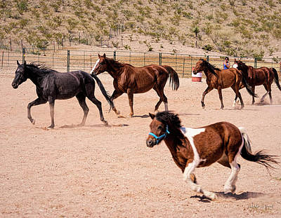 Photograph - Horses Unlimited-4a by Walter Herrit