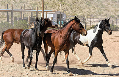 Photograph - Horses Unlimited_5a by Walter Herrit