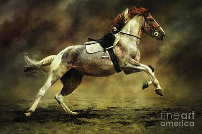 Photograph - Horses Xi by Dimitar Hristov