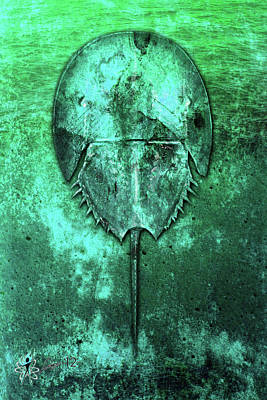 Digital Art - Horseshoe Crab by Doug Schramm