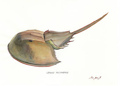 Horseshoe Crab Painting - Horseshoe Crab by Juan Bosco