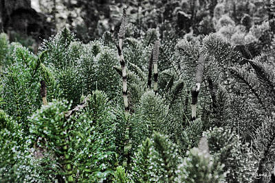 Photograph - Horsetail Dewpoint by Rasma Bertz