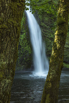 Tree Photograph - Horsetail Falls by Alan Kepler