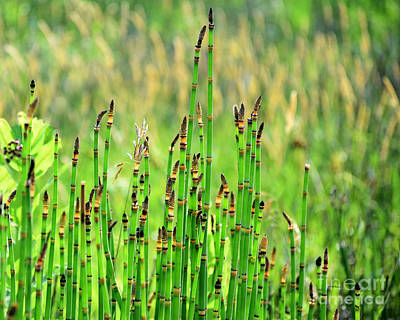 Photograph - Horsetail Rush by Kathy M Krause