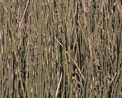 Photograph - Horsetails #1 by Photography by Tiwago