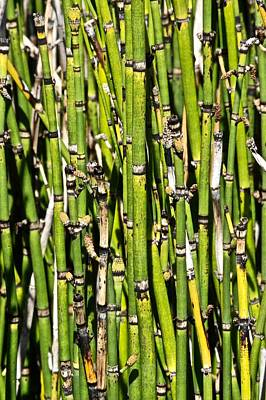 Photograph - Horsetails #2 by Photography by Tiwago