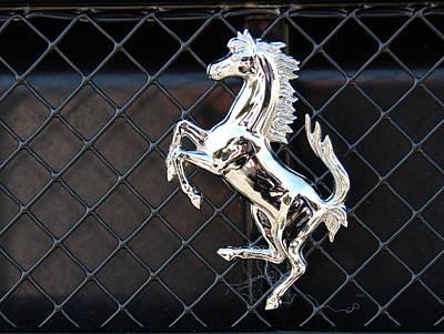 Photograph - Horsey by John Schneider