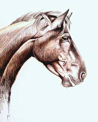 Sketching Mixed Media - Horsing Around  by Janine Bouwer