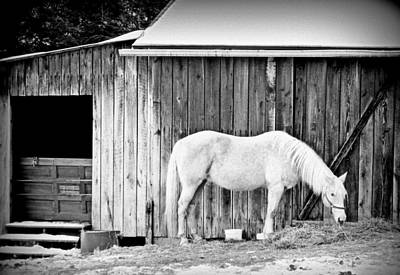 Shed Digital Art - Horsing Around by Carrie Wilhelm
