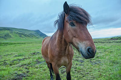 Photograph - Horsing Around Iceland by Greg Wyatt