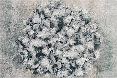 Hortensius Art Print by Maren Schram