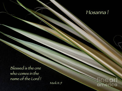 Photograph - Hosanna by Ann Horn