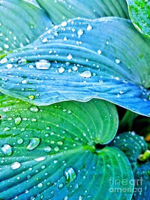 Photograph - Hosta After The Rain by Rachel Hannah